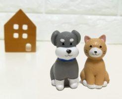 注文住宅で犬が喜ぶ工夫