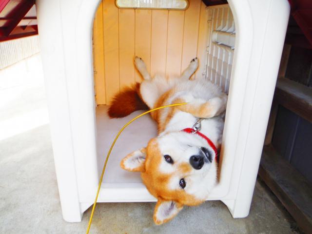 犬のプライバシー